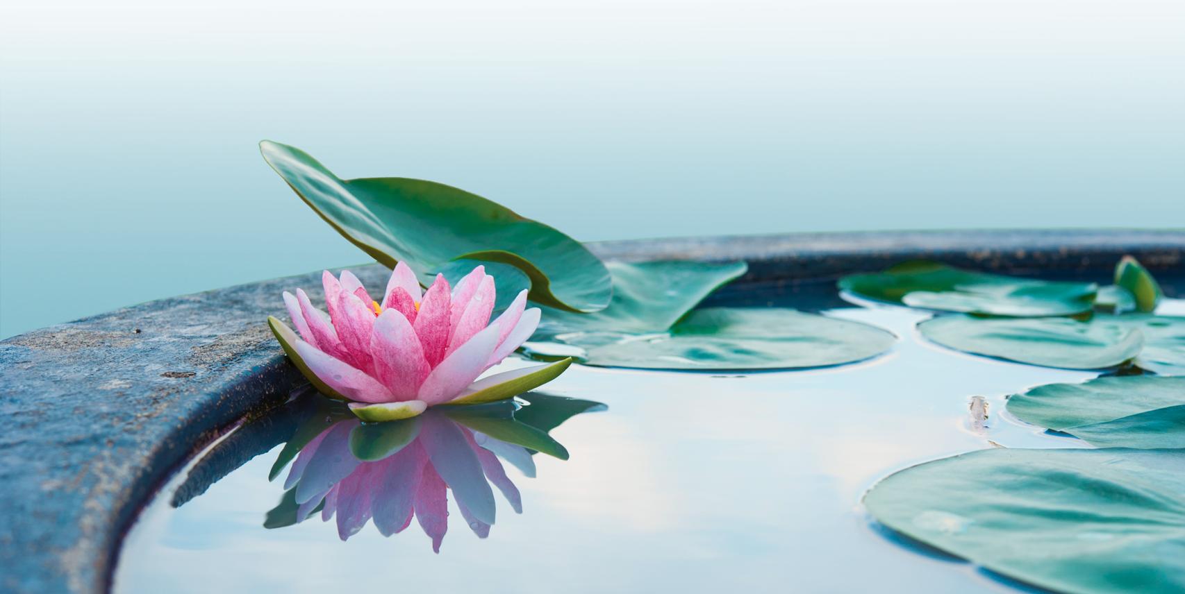 mindfulness - en arbejdsbog