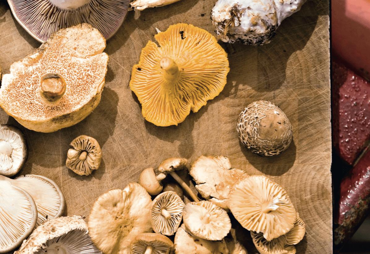 svampelasagne, lasagne med kantareller, opskrifter med svampe, svampekogebogen