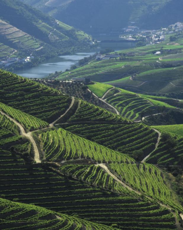 oxford vinleksikon, Det bedste opslagsværk om vin