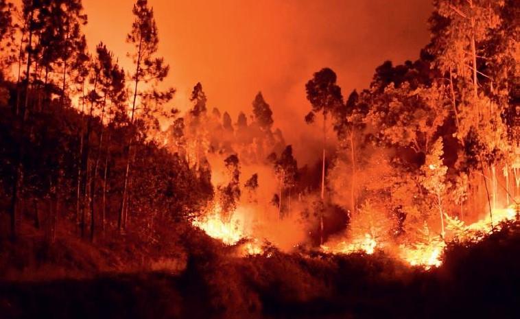 Skovbrand, Carsten Juul, Australien, ild, flammer, erindringsroman, erindringer, liv og død, venskab, flugt