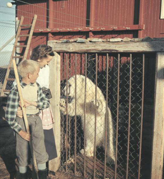 hvor jeg var barn, var der isbjørne, isbjørn, anne knudsen, erindringsbog, grønland,
