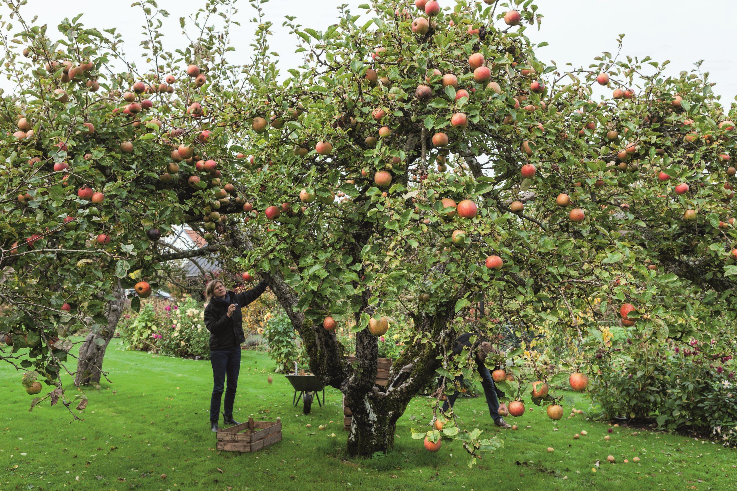 Haven i Troense, Helle Troelsen, efterår, have
