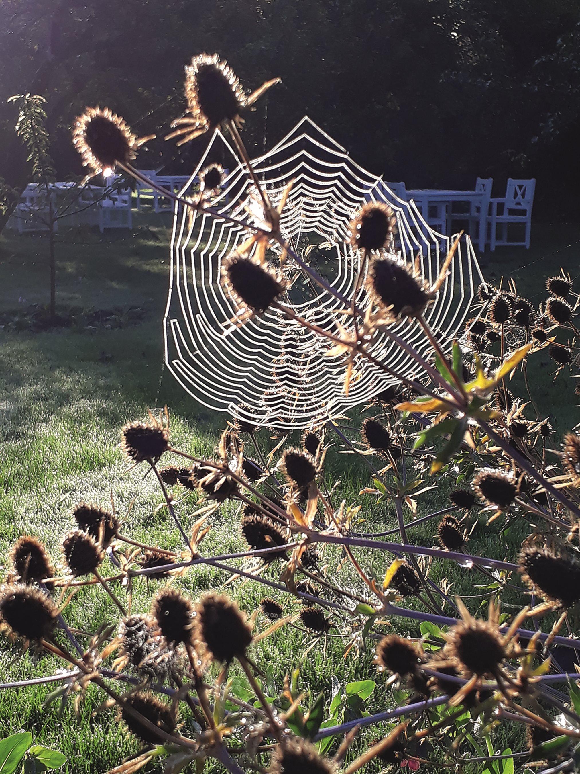 Efterår, have, Helle Troelsen, Haven i Troense