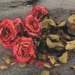 Smuglæs i Asfalt og blomster. Ny stærk skæbnefortælling af Benn Q. Holm